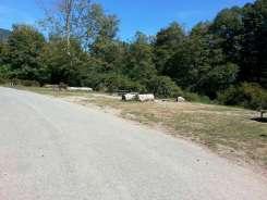 Dosewallips-State-Park-Campground-07