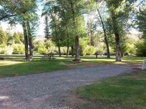 Dubois-Wind-River-KOA-pull-thru-rv-site-trees-2