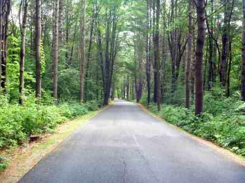 Half-Moon-Pond-State-Park-roadway