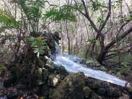 John Pennekamp Coral Reef State Park in Key Largo Florida 6