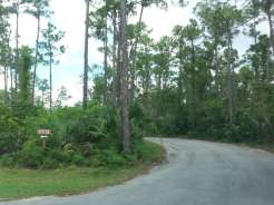 Long Pine Key Campground in Everglades National Park6
