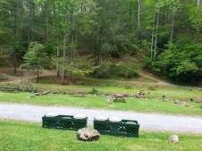 Moonshine Creek Campground in Sylva North Carolina02