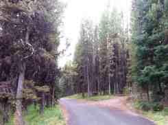 bridge-bay-campground-yellowstone-national-park-12
