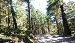 deer-park-campground-olympic-national-park-04
