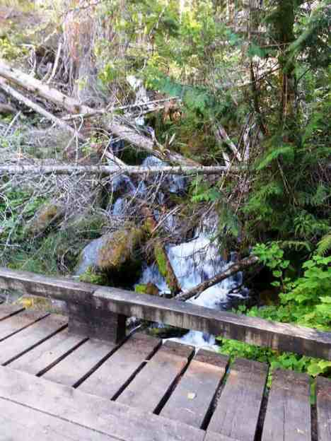 dosewallips-campground-olympic-national-park-01