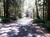 fairholme-campground-olympic-national-park-03