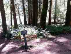 fairholme-campground-olympic-national-park-07