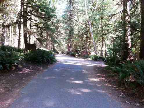 fairholme-campground-olympic-national-park-09