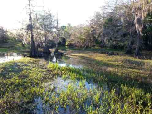 fisheating creek3