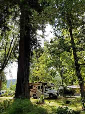 giant-redwoods-cam-destination-myers-flat-ca-18
