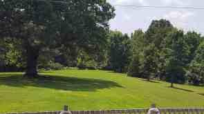 grassy-area