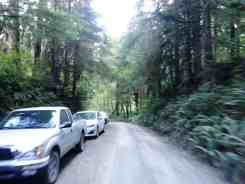 graves-creek-campground-olympic-national-park-02
