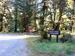 graves-creek-campground-olympic-national-park-08