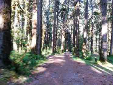 graves-creek-campground-olympic-national-park-12