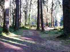 graves-creek-campground-olympic-national-park-13