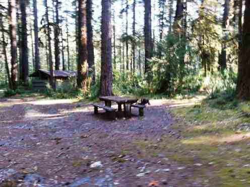 graves-creek-campground-olympic-national-park-18