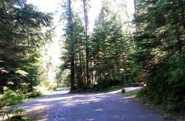 heart-o-the-hills-campground-olympic-national-park-05