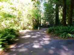 hoh-campground-olympic-national-park-15