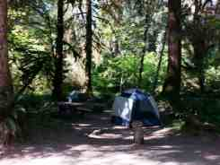 hoh-campground-olympic-national-park-19