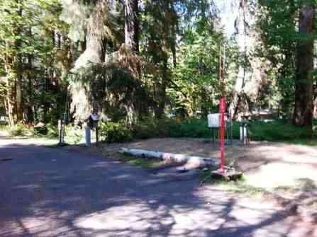 hoh-campground-olympic-national-park-20