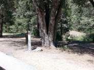 idyllwild-county-park-campground-2