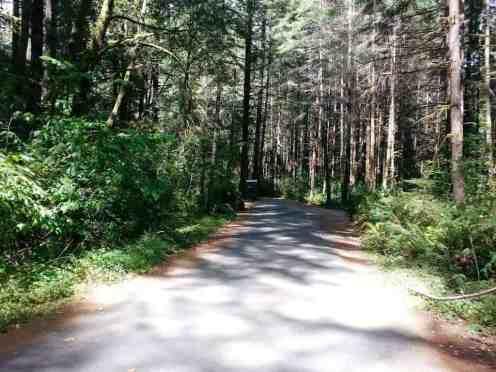 jedediah-smith-campground-19