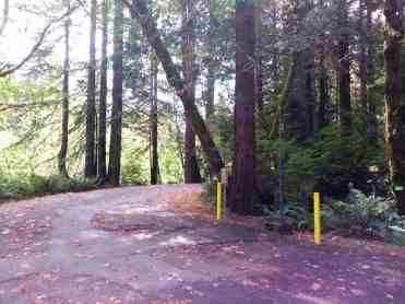 mill-creek-campground-redwoods-03