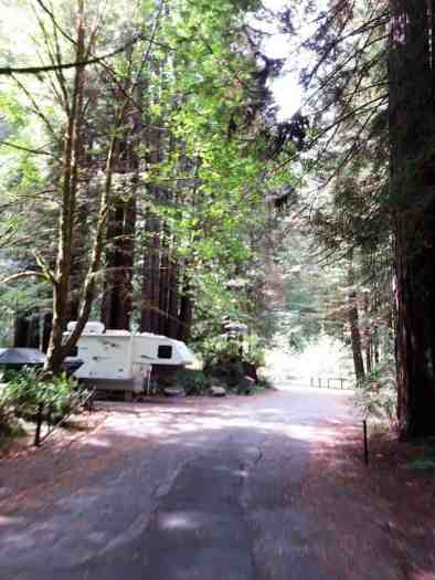 mill-creek-campground-redwoods-06