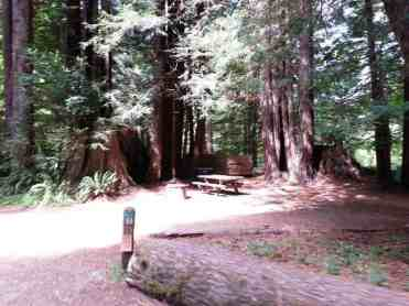 mill-creek-campground-redwoods-07