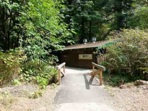 mill-creek-campground-redwoods-10