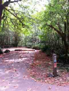 mill-creek-campground-redwoods-14