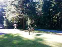 mora-campground-olympic-national-park-10