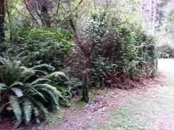 patricks-point-state-park-campground-trinidad-07