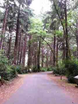 patricks-point-state-park-campground-trinidad-13