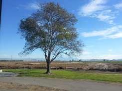 prado-regional-park-campground-05