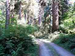 queets-campground-olympic-national-park-03