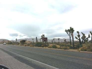 ryan-campground-joshua-tree-national-park-1