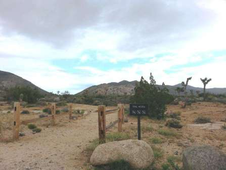ryan-campground-joshua-tree-national-park-9