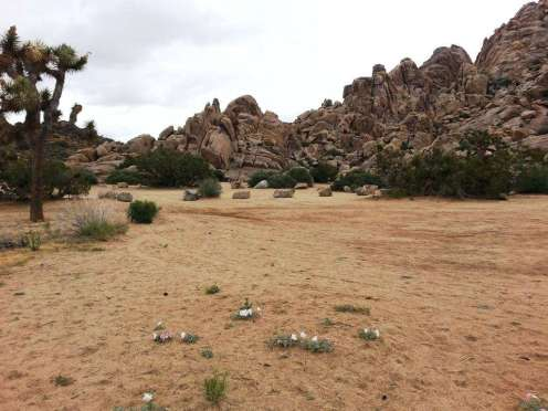 sheep-pass-campground-joshua-tree-national-park-5