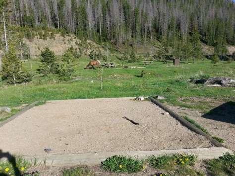 timber-creek-rocky-mountain-national-park-tent-elk
