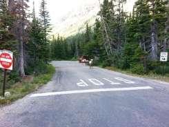 two-medicine-campground-glacier-national-park-09
