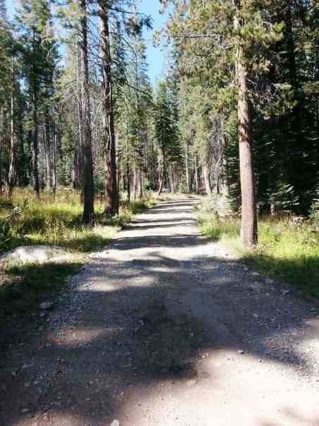 yosemite-creek-campground-yosemite-national-park-ca-03