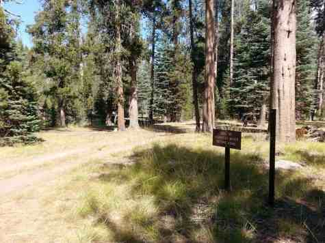 yosemite-creek-campground-yosemite-national-park-ca-06