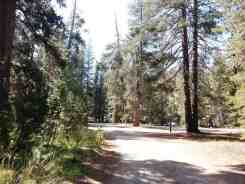 yosemite-creek-campground-yosemite-national-park-ca-15