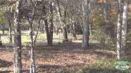Greenbrier Island Campground