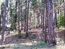 inn-town-campground-nevada-city-15