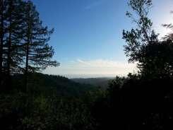 forest-nisene-marks-campground7