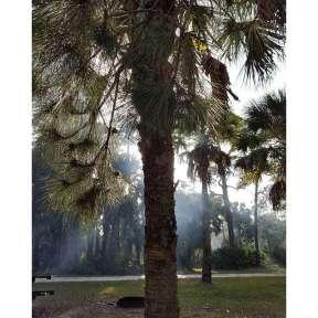 tree-sun