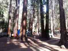 atwell-mill-campground-sequoia-national-park-04