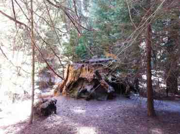 atwell-mill-campground-sequoia-national-park-08